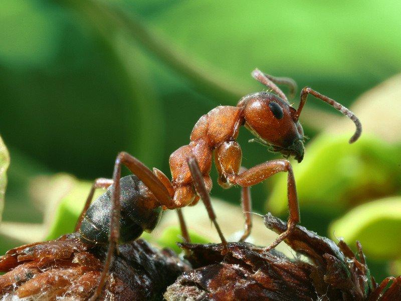 3 способа, как избавиться от муравьев в доме. Ты даже не подозревала, что это так легко!