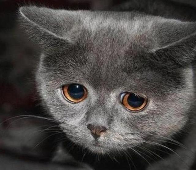 35 самых милых фото с обижульками животных