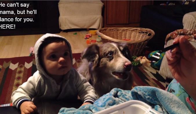 Мама учила сына говорить слово «мама». Но собака заговорила раньше малыша! Посмотрите!