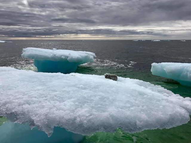 Рыбаки подумали, что нашли тюленя, плывущего на айсберге, но затем они подплыли ближе