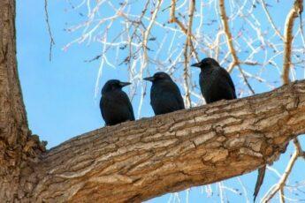 https://www.epochtimes.ru/eet-content/uploads/2019/04/tree_nature_birds_three_branches_murder_crows_challengeyouwinner-270591-700x454-676x450.jpg