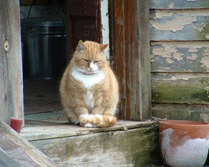 Бизнес-план кота Василия:как вся деревня хитрого кота кормит