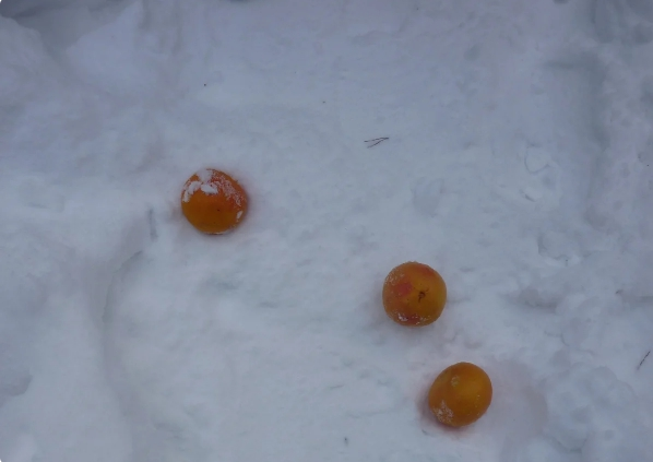 В тот день, когда Ульяна Устрица устала от жизни и решила уйти, баба Мира рассыпала на тропинке апельсины