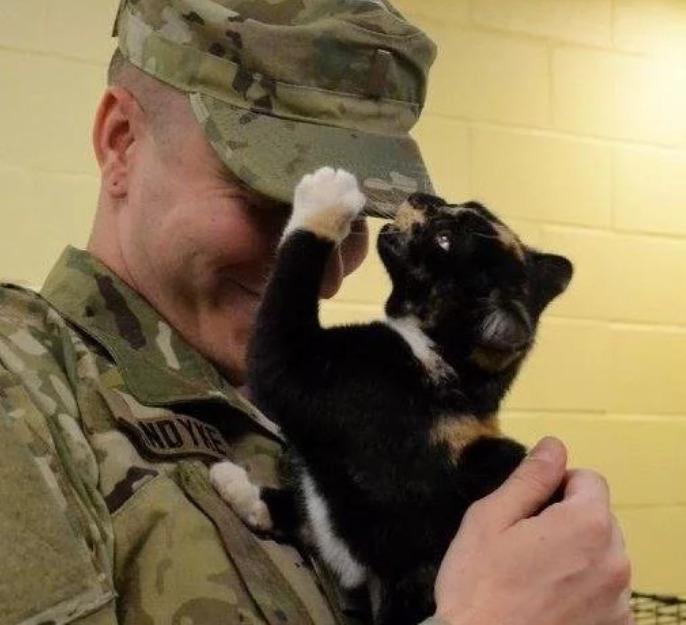 Мужчина, который никогда не был кошатником, пришёл усыновить щенка, но в итоге сам стал избранником котёнка