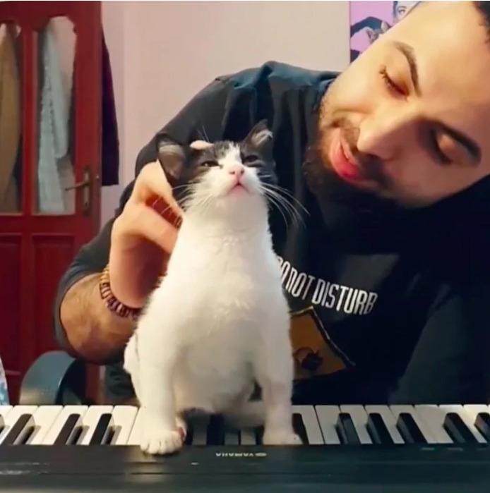 Пианист спасает котёнка, который не может ходить и помогает ему снова встать на четыре лапы