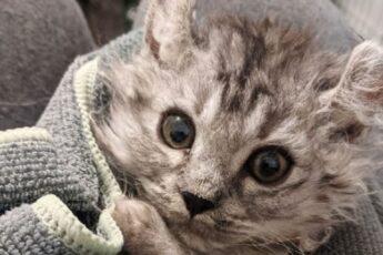 https://lemurov.net/wp-content/uploads/2020/03/manx-cat-768x429-1.jpg