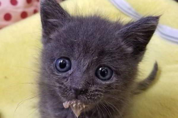 Одинокий котёнок, невесть как оказавшийся у реки, теперь не может жить без постоянных объятий