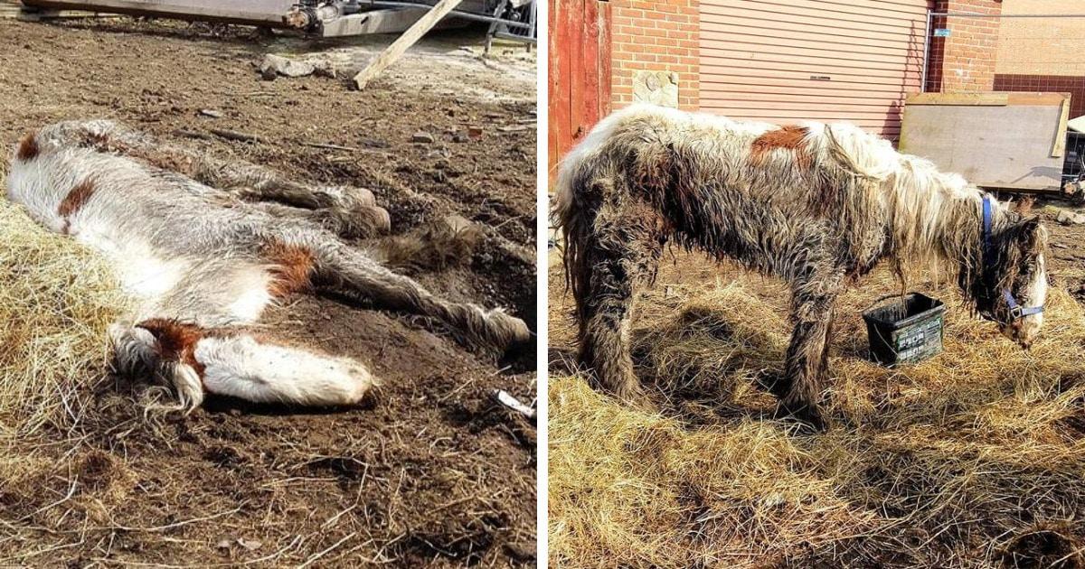 Волонтёры спасли лошадь, которую уже посчитали погибшей. Но она выжила и показала, какой красавицей может быть