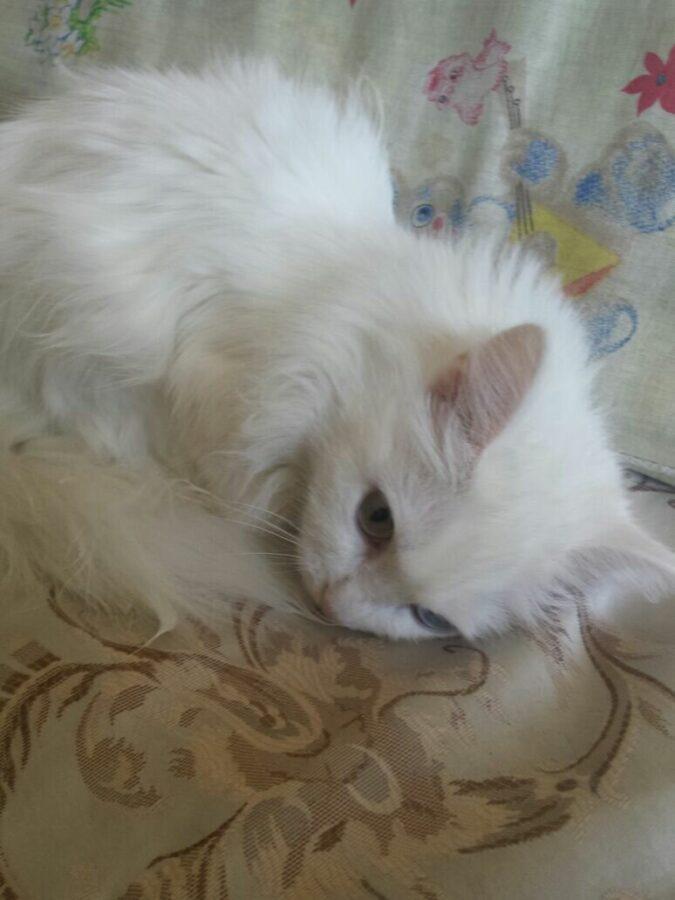 Клеопатра, она же Клёпка, своенравная кошка и отличная актриса