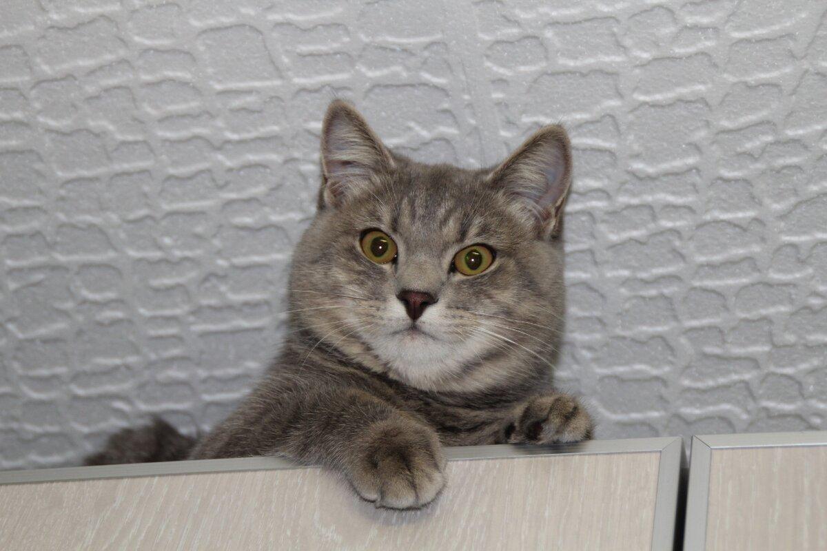 Отдали кота в добрые руки, а его выбросили. Наш кот нашел дорогу домой через 2 года, он не забыл нас