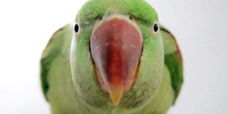 О птичках!