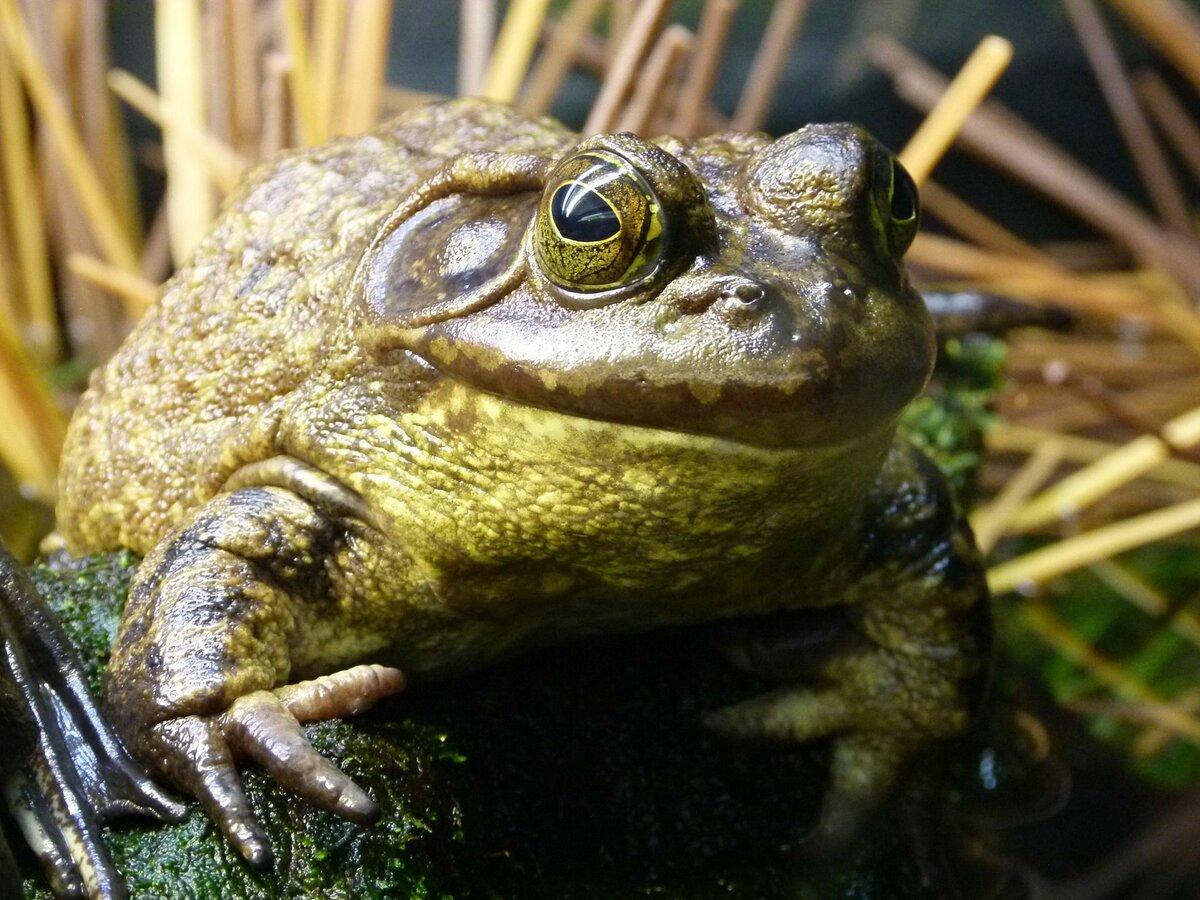 Жаба, вообще-то симпатичная