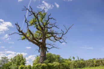 Изображение выглядит как дерево, небо, внешний, растение Автоматически созданное описание