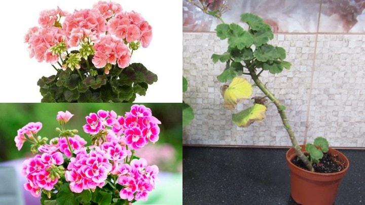 Изображение выглядит как цветок, растение, свежий Автоматически созданное описание