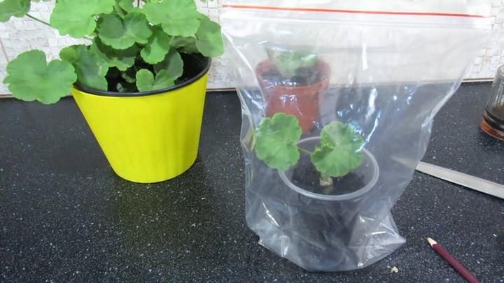 Изображение выглядит как растение, пластмассовый, питание, загроможденный Автоматически созданное описание